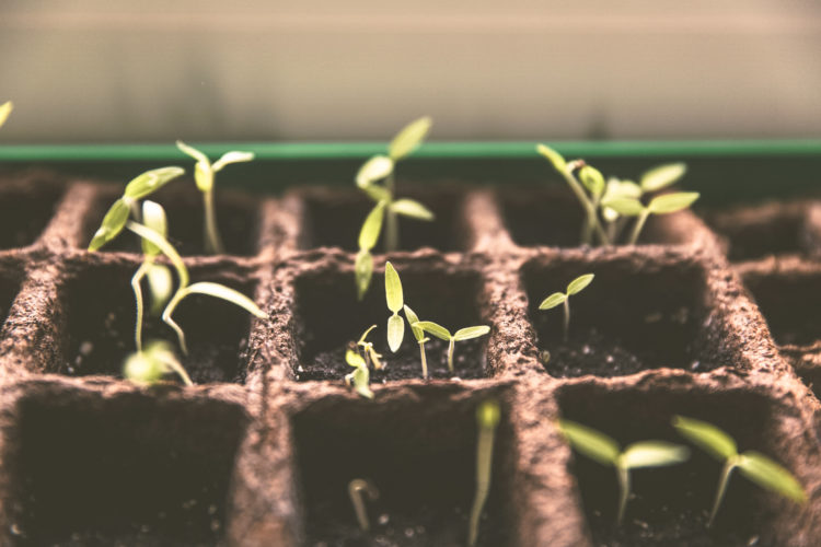 fruit and vegetable seedlings, reducing our waste
